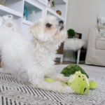 6 Reasons Why Dogs Love & Need Toys