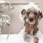 How Often Should You Wash & Bathe Your Dog Per Week?