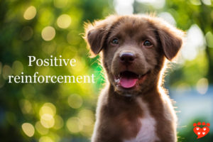 positive reinforcement puppy