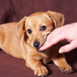 How To Stop Your Dog From Biting & Nipping