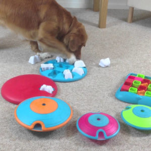 puzzle toys for dog