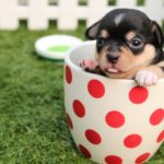 Top 10 Small, Medium & Large Dog Breeds; Facts, Information & Names