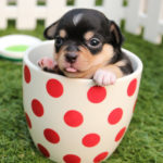 Top 150 Dog Breeds, Size, TufRank, Names & Origin