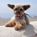 How Did The 10 Most Common Mixed Breed Dogs Come into Being?