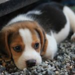 How Do You Potty Train A Puppy And Stop Them From Eating Poop?