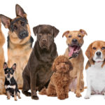 What Is National Dog, Puppy & Pet Day All About?