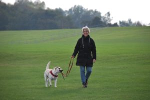 walking aggressive dog