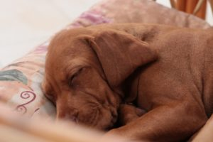 How Many Hours A Day Do Dogs Sleep And How Much Do They Need