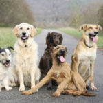 How To Choose The Dog Breed That Suits You Best
