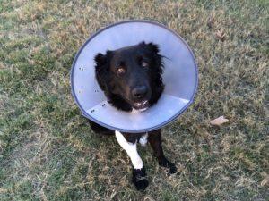 cone-of-shame