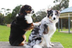 dog massaging dog