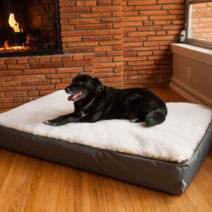 ortho-dog-bed