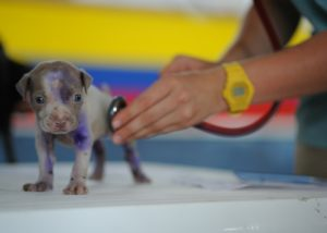 puppy check up