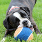 Why Do Dogs Play Bite & Nip?