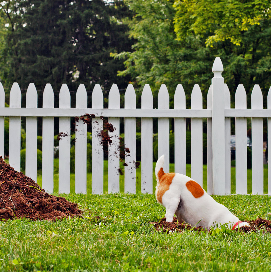 How To Stop Your Dog Digging Your Garden Up