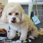 Advice for Grooming Your Dog & Equipment To Use