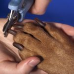 How Often Should You Trim Your Dog's Nails And What Should You Do If They Bleed?