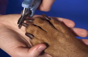 clipping dog nails