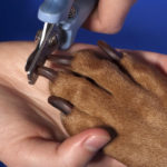 How Often Should You Trim Your Dog's Nails & What To Do If They Bleed?