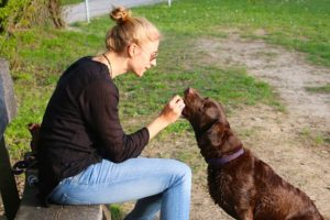 human feeding dog