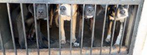 rescue center dogs