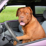 What Dog Car Seats Are The Safest? Our Top 5 Reviewed
