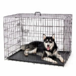 Choosing Between Dog Crates & Kennels? 5 of the Best Reviewed