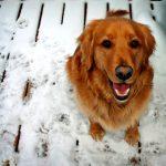 Natural Remedies to Treat Dog Dandruff