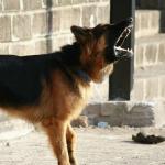 Dog Bark Collars: Cruel or Kind?