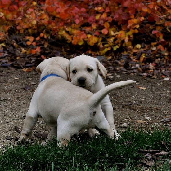 2 puppies square