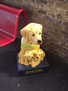 Guide dog collection box