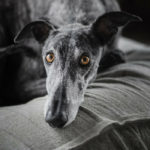 Separation Anxiety in Dogs: 5 Causes & 5 Treatments