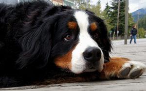 big cute dog