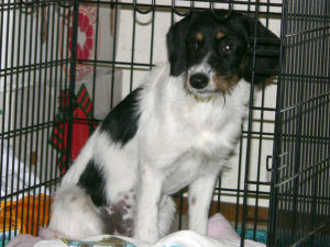dog crate fluffy