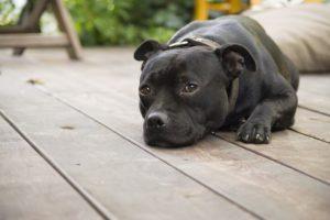 dog decking