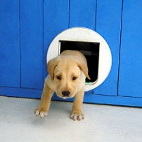 dog door square