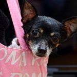 Canines and the City: 3 Steps to House-train Your City Dog!