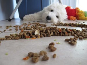 dog playng with food