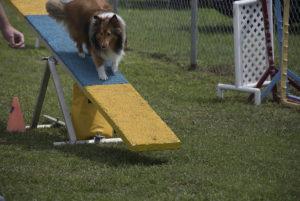 dog see saw