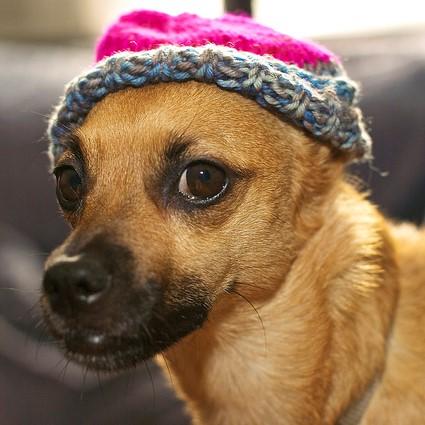 hipster dog square