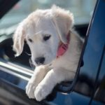 Road Trip! 5 Top Tips for Dog Car Travel