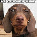 Funny Dog Memes – Part 1