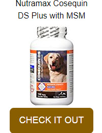 Dog Health Supplement