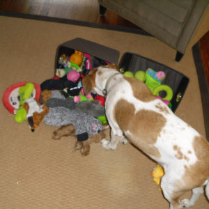 choose dog toys