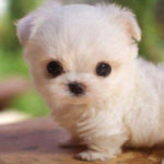 Cute Puppy Pictures