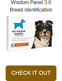 Dog DNA Test Kit