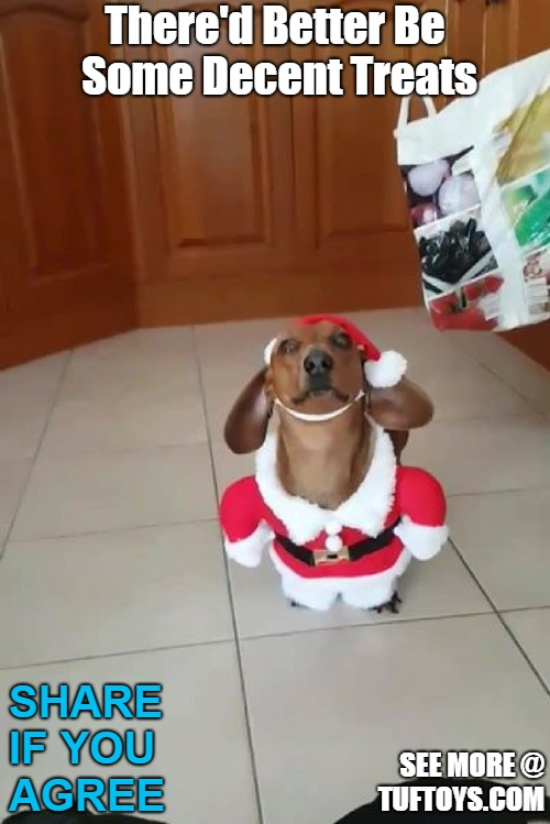 adorable puppy wondering when of if she will get any of the presents shes been helping deliver for a while