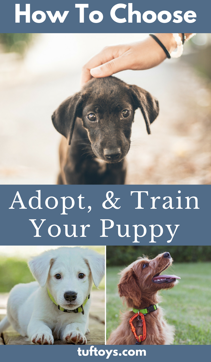 How to choose, adopt and train your new puppy