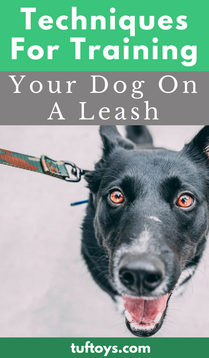 techniques for training your dog on a leash