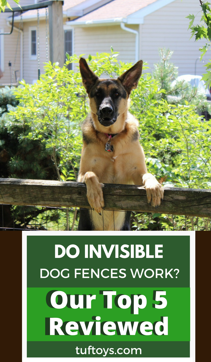 do invisible dog fences work? here are the top 5 reviewed